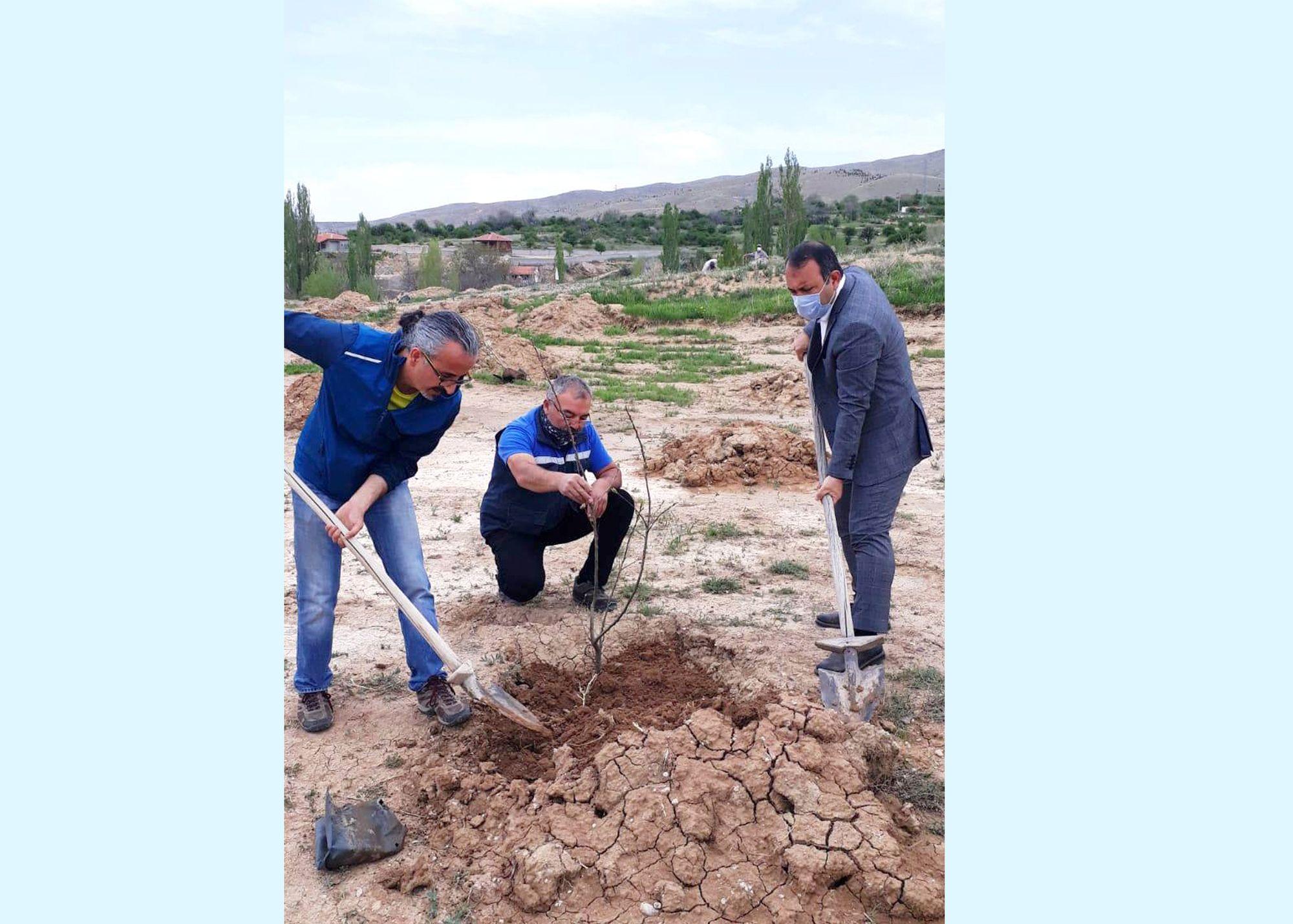 Başkan İbaş Osman Nuri Diler hatıra ormanına ağaç dikimi gerçekleştirdi.